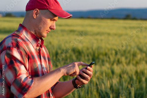 Obraz Farmer or agronomist standing in the wheat field holding a smartphone while examining the yield quality. - fototapety do salonu
