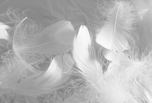 Beautiful Abstract Black Feathers On White Background And Soft White Feather Texture On White Texture Pattern, Dark Theme Wallpaper, Gray Feather Background, Gray Banners, White Gradient