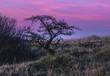 Leinwanddruck Bild - View Of Tree At Sunset