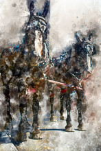 Watercolor Painting Of Horses