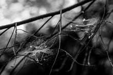 Close-up Of Spider Web On Bare Tree Branches