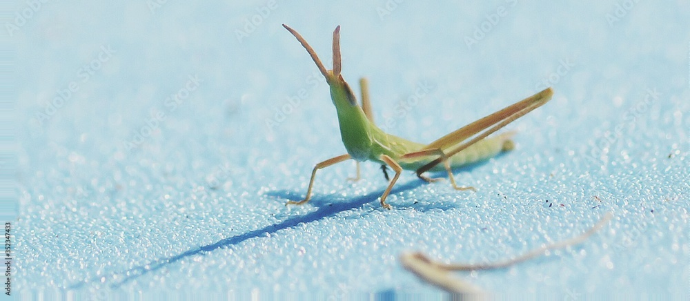 Fotografie, Obraz Close-up Of Grasshopper