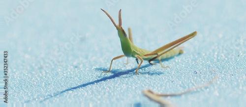 Valokuva Close-up Of Grasshopper