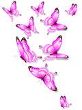Fototapeta Motyle - butterfly634