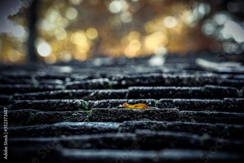 Cuadros en Lienzo Low Angle View Of Dry Fallen Leaf On Step