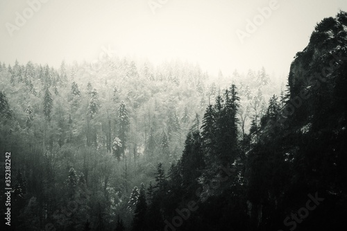 Foto Foggy Forest