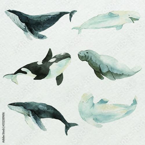 Obraz na plátně Sea mammals in watercolor set vector