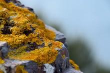 Close-up Of Yellow Moss