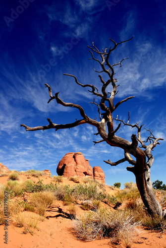Canvas Bare Tree And Rock Formation Against Sky At Arches National Park