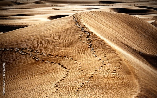 Fotografia High Angle View Of Paw Prints On Sand Dune