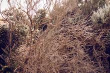 Wild Natural Tree Branch In Melbourne Park