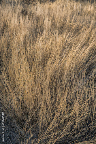 Fotografie, Obraz Dry Grass On Field