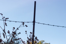 Old Barbed Wire Fence And Dry Burdocks Against The Sky