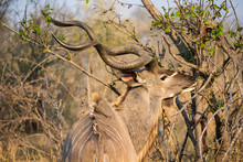 South Africa - Kruger National...