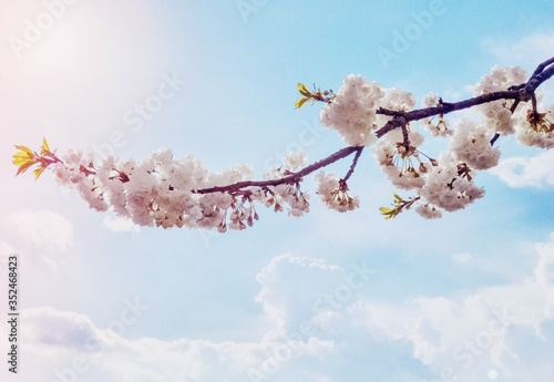 Low Angle View Of Flower Tree Against Sky Fotobehang
