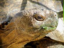 Close Up Portrait Of A Tortoise Head