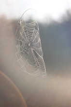 Spider Woven Web On Bushes On A Field At Sunrise