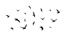 Flying Flock Of Birds. Flight ...