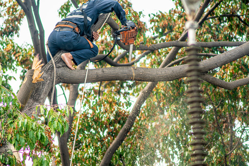 Pruning workers in the city