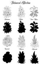 Set Of Black And White Outline Flowers -belladonna, Succulent, Mallow, Venus Flytrap.