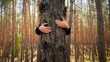 Closeup Image Of Female Activist Hugging And Embracing Pine Tree In Forest. Concept Of Love, Ecology Protection And Harmony With Nature