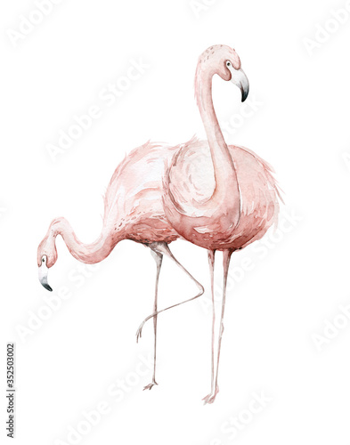 Obraz Hand drawn watercolor tropical flamingo birds. set of African flamingos. Exotic rose bird illustrations, jungle tree, brazil trendy art. Perfect for fabric design. - fototapety do salonu