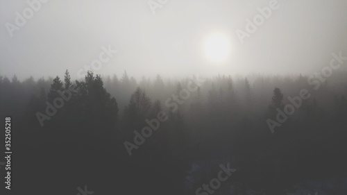 Fototapety, obrazy: Silhouette Of Trees During Foggy Weather