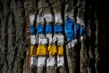 Hiking Sign On A Tree Trunk. A...