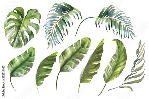 Obraz Tropical leaves collection. Watercolor palm leaf, monstera, banana leaf - fototapety do salonu
