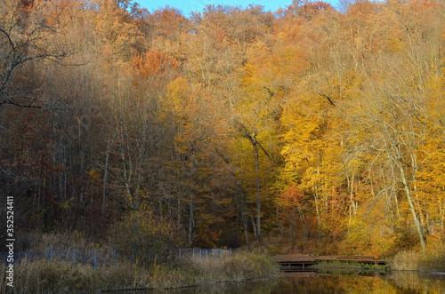 Fototapety, obrazy: Autumn forest and lake on sunny day