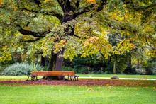 Round Park Bench Under An Oak ...
