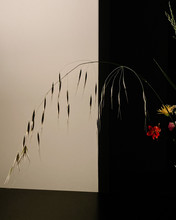 Dried Flowers On White And Bla...