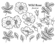 Wild Rose Flower Set, Line Art...