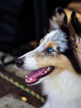 Dog Close-up Portrait