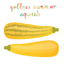 Yellow Summer Squash. Two Kind...