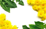 Flowers composition. dandelions green leaf on white background. Spring concept. Flat lay, top view copy space. yellow
