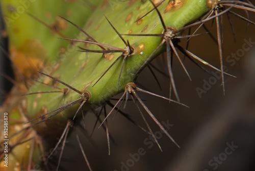 Photo afilada Espinas de cactus de desierto de sur america