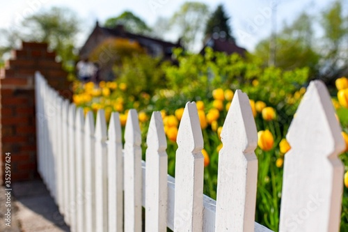 Cuadros en Lienzo Close-up Of Picket Fence On Tulip Garden