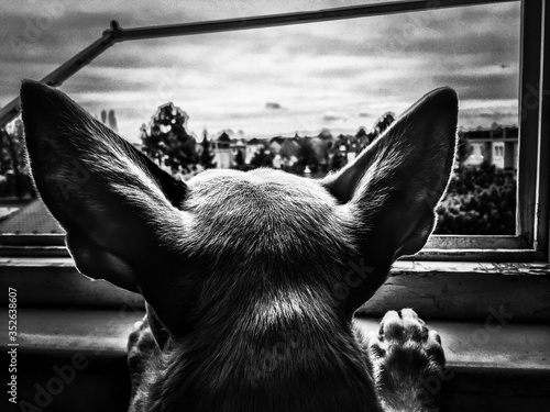 Rear View Of Dog At Window Canvas Print