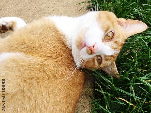 Close-up Portrait Of Ginger Cat Resting On Footpath Fototapet