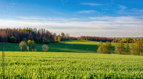 Fototapeta Beautiful green spring rural landscape with green field. Rural landscape. Spring landscape. Agricultural field in countryside. Beautiful Czech Republic Vysocina, Highland countryside obraz