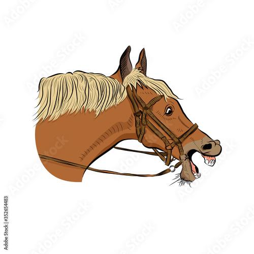 Slika na platnu The horse head.  Very surprised emotion.