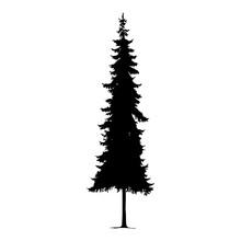 Silhouette Of Pine Tree. Hand ...