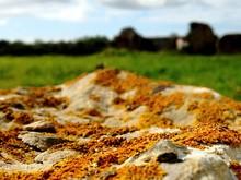 Close-up Of Lichen Covered Roc...