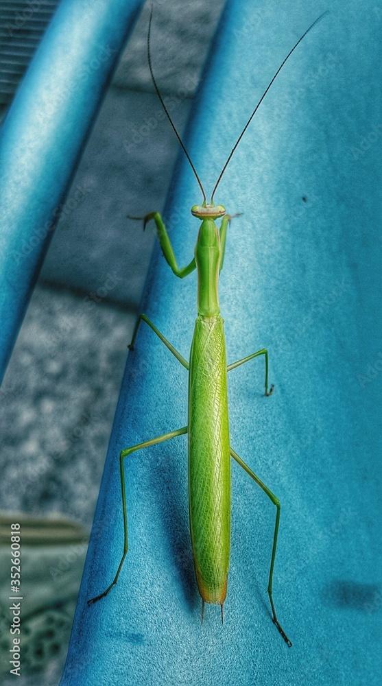 Fotografie, Obraz High Angle View Of Grasshopper
