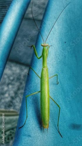Valokuva High Angle View Of Grasshopper