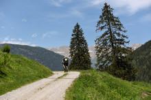 Mountainbike Montagna Pedalare...