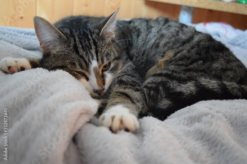 Fototapety, obrazy: Close-up Of Cat Sleeping On Bed At Home