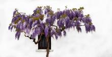 Close-up Of Purple Flowers Aga...