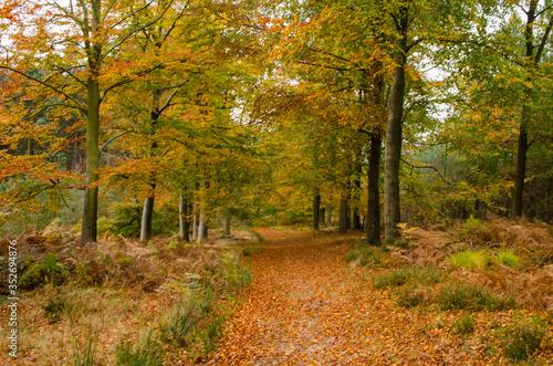 Trees In Forest During Autumn © jonathan meddings/EyeEm